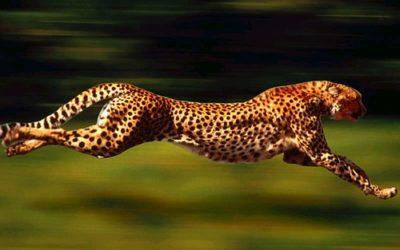Le speed-coaching ViTalentis : une pause de qualité pour prendre le temps d'agir vite et mieux